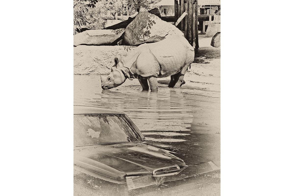 46_TRIP_Rhino