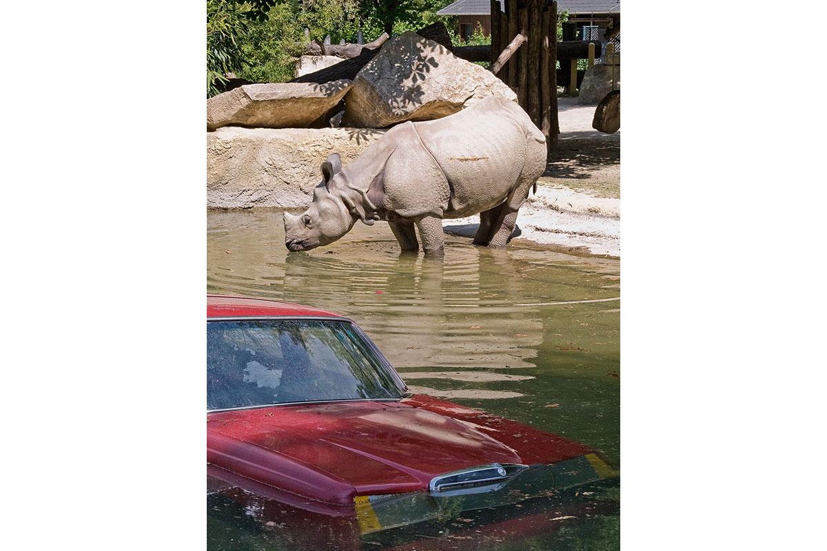 TRIP_Rhino3